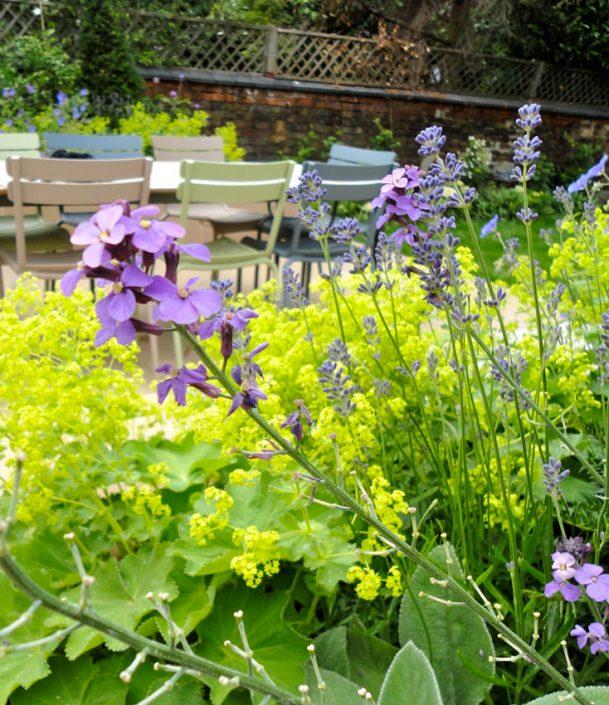 Lavender & ladies mantle