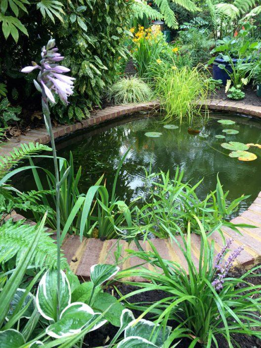 Waterside marginal plants