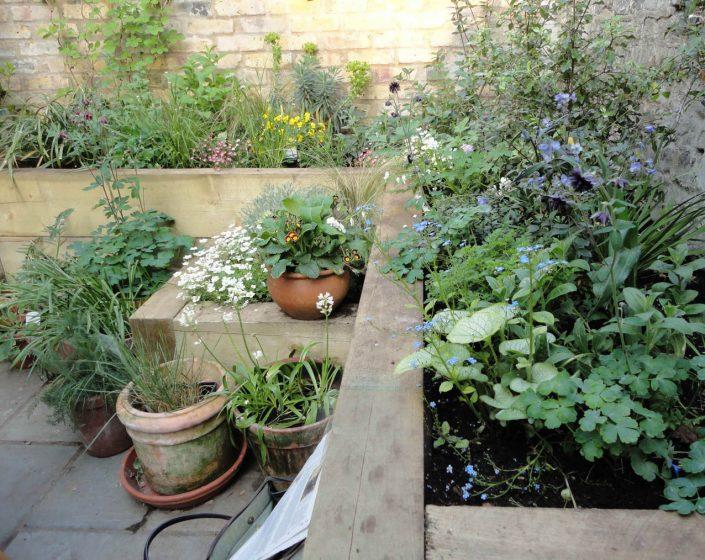 Cottage garden planting