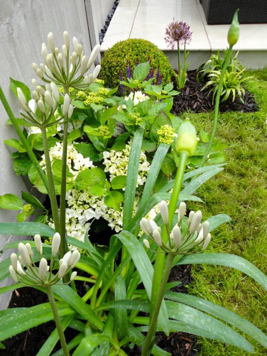 Fresh white & green planting scheme