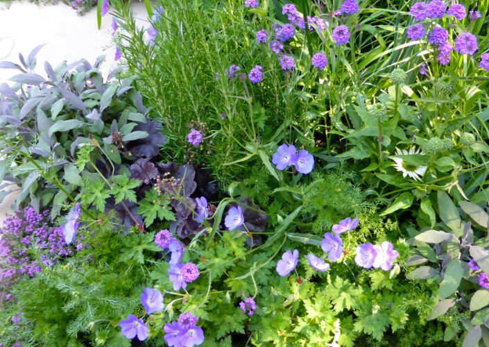 Flowers & herbs