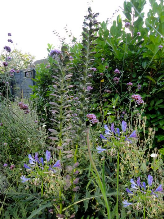 'Tapestry' planting