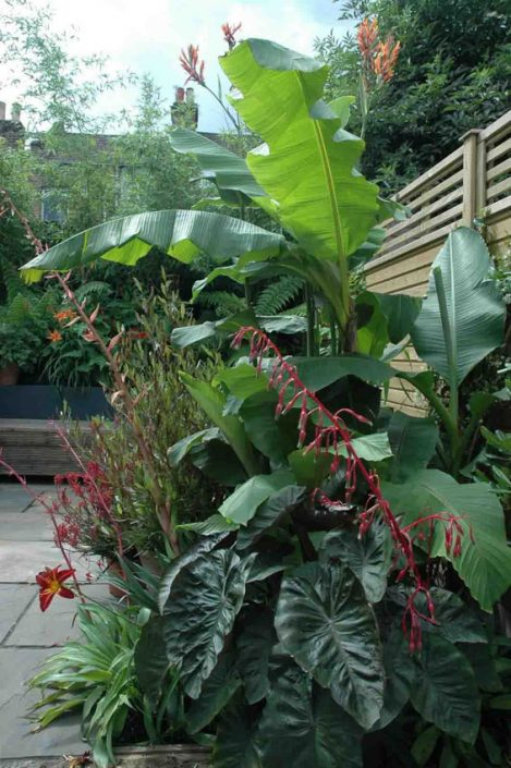 Architectural foliage