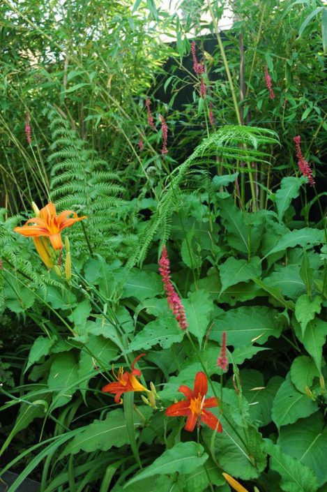 Lilies and ferns