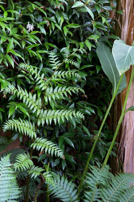 Textures in foliage