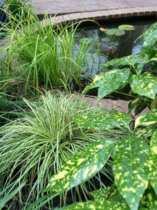 Grasses & foliage