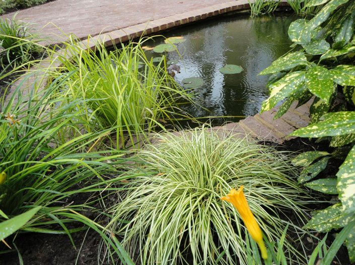 Poolside planting by Antonia Schofield, Garden designer