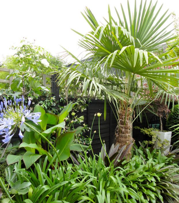 Palm tree, cannas and agapanthus