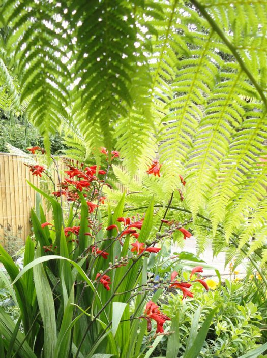 Ferns & hot red flowers