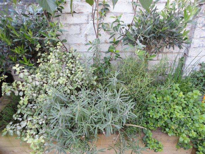 Soft colours planting