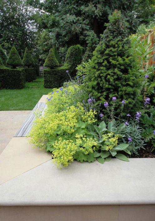 Yew topiary cones
