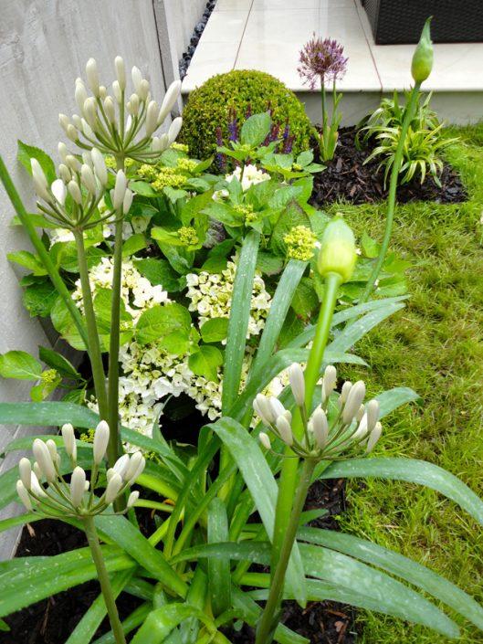 Fresh white & green planting scheme