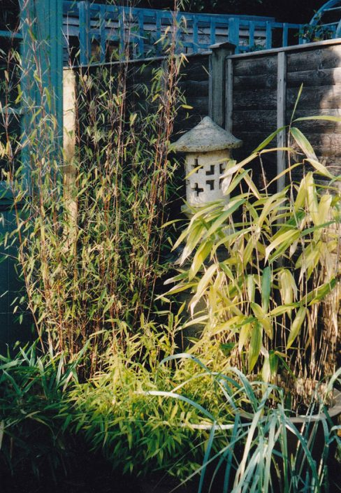 Bamboos and Chinese lantern