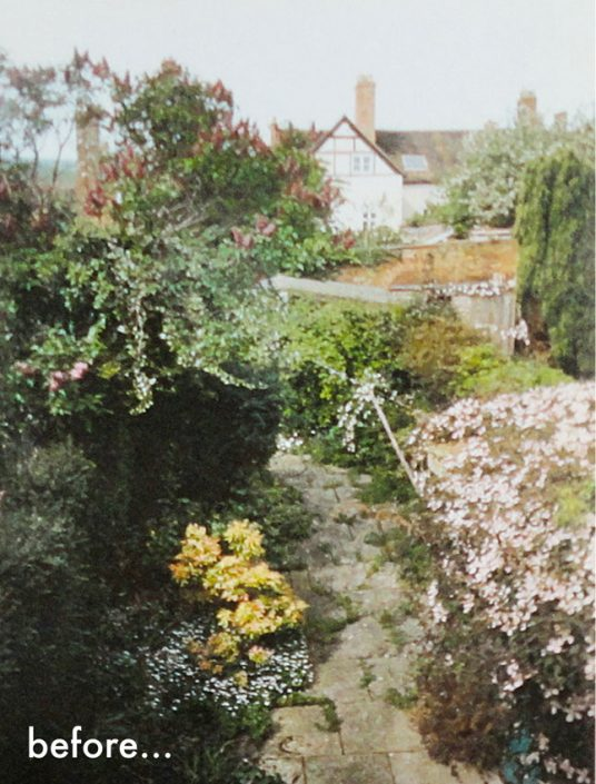 Overgrown garden before redesign