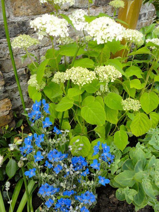 Hydrangea & delphiniums