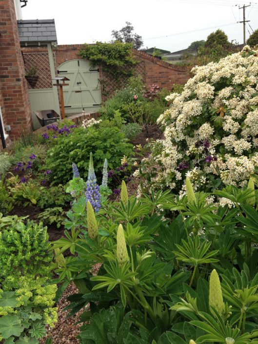 Mid summer full blooms - Antonia Schofield Garden Design