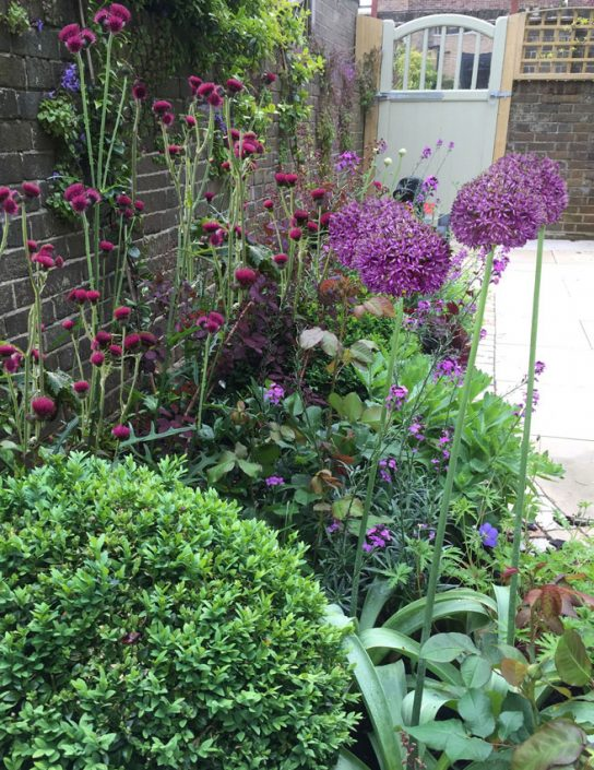 Alliums and box balls