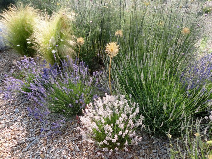 Wispy grasses and lavender
